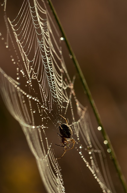 Spider, Network, Insect, Nature - Free image - 211932