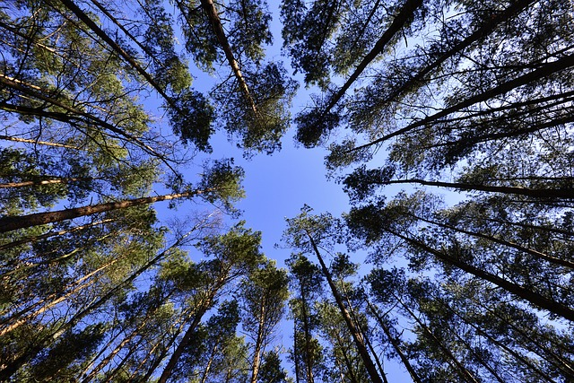 Forests, Sky, List - Free image - 231066